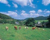 Oberrarbach bei Schmallenberg im Sauerland - Nordrhein-Westfalen