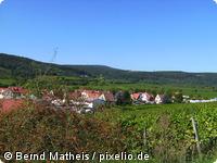 Weinberge in der Peripherie von Bad Dürkheim