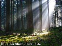 Sonnenstrahlen am Morgen im Nordschwarzwald