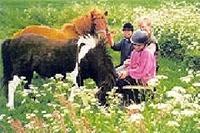 Kinder bei den Pferden