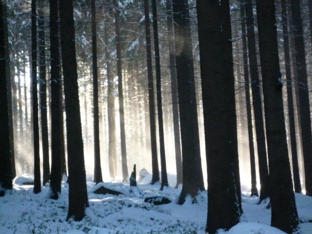 Winterwald Oppach