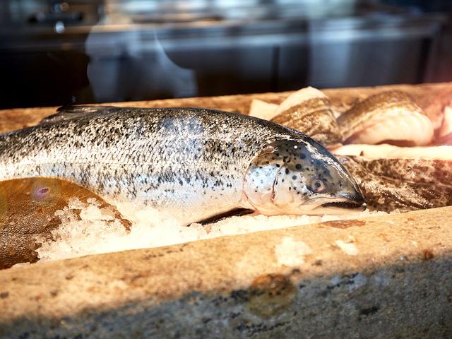 Fangfrischer Fisch im Isfjord