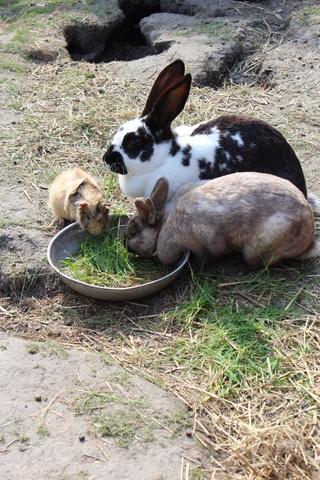 Wir haben viele verschiedene Kleintiere