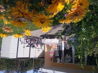 *Waldblick Fewo Noeske - GM 69606 eine Terrasse zum verweilen lädt Sie gerne ein