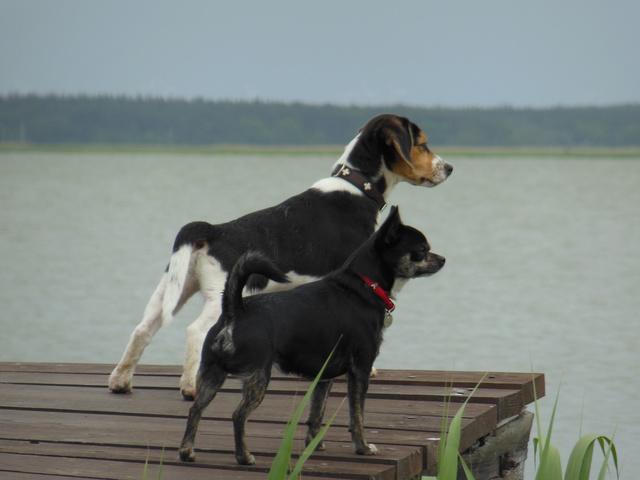 Urlaub mit Hund im Piratennest