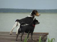 Ostseehalbinsel Darß mit Hund Urlaub mit Hund im Piratennest