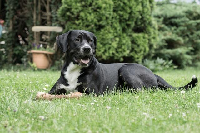 Bolle freut sich immer auf Hundebesuch