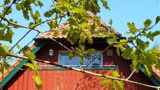 Am Bernsteinweg Dachgeschoßwohnung mit Blick in den Darßwald