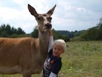 Bambi lässt sich gerne streicheln