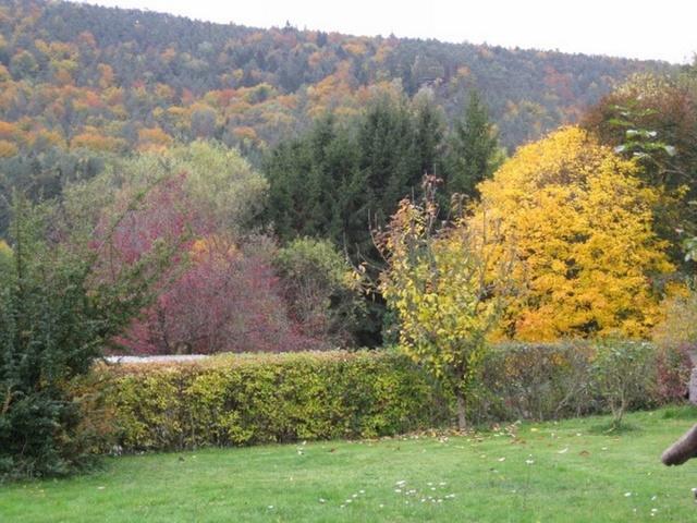 Rumbach im Herbst