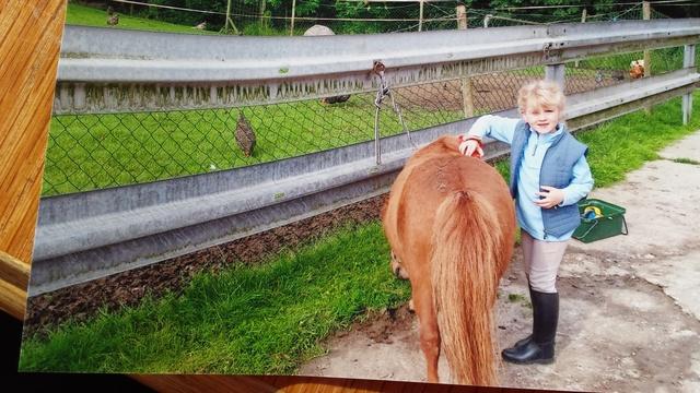 Erster Ponykontakt