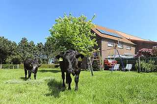 Ferienhof Janssen in Westerholt Außenansicht