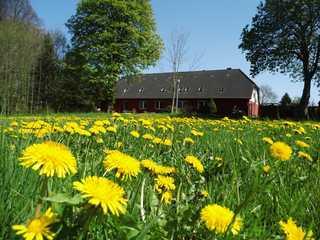 Ferien auf dem kleinen Bauernhof Blick auf die Ferienwohnung