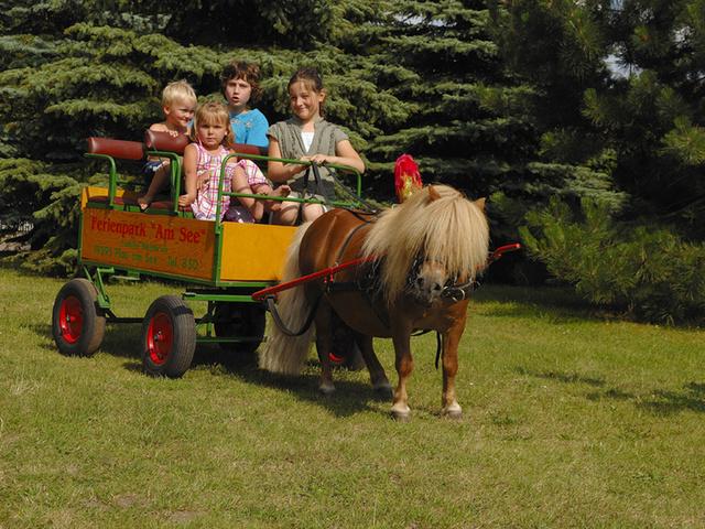 kleine Pferdekutsche für die Kinder