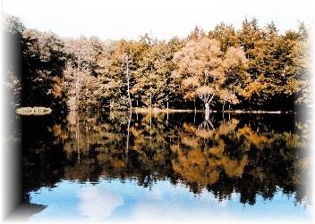 Waldsee (Angelgewässer) 150m