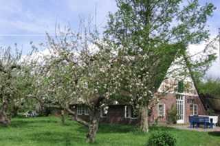 Ferienhaus Zander Haus hinter Bäumen